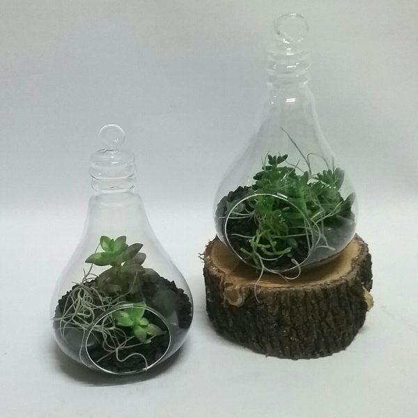 light bulb tarerium