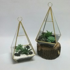 Plants & Gifts