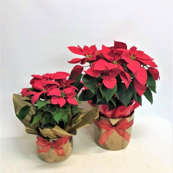 Festive-Holidays