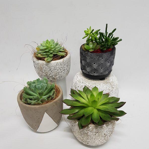 succulent pot