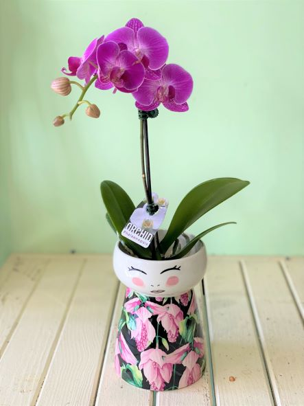 Orchid-lady-planter
